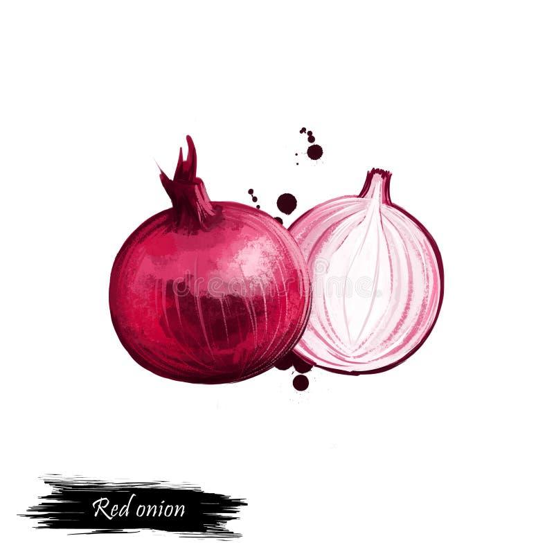 Digitale kunst Rode ui of Purpere die huidui op witte achtergrond wordt geïsoleerd Organisch gezond voedsel Rode groente Hand get stock illustratie
