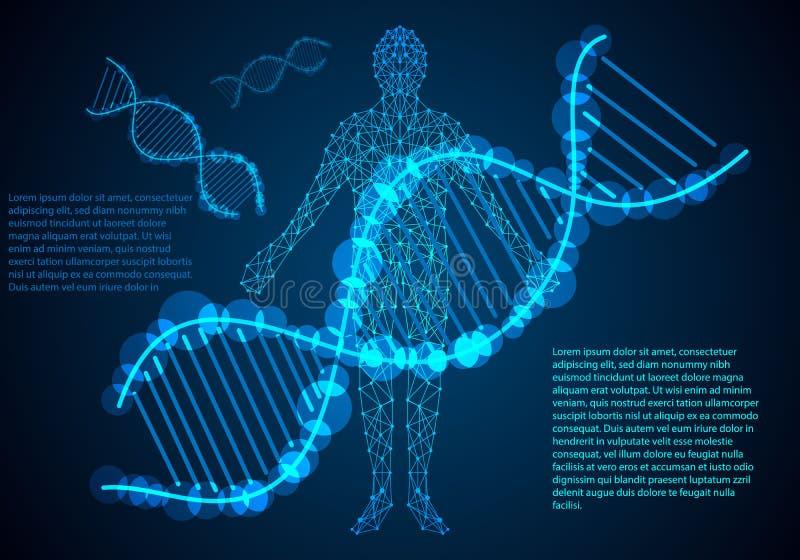 Digitaler Link des menschlichen Körpers des Konzeptes der abstrakten Wissenschaft und DNA hallo technisch lizenzfreie stockfotografie