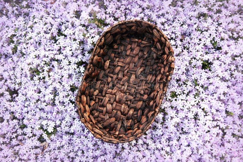 Digitalfotografie-Hintergrund der hölzernen Korb-Stütze im purpurroten Blumen-Garten stockfotos