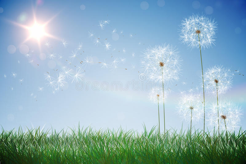 Digitally generated dandelions against blue sky. Digitally generated dandelions against sunny blue sky vector illustration