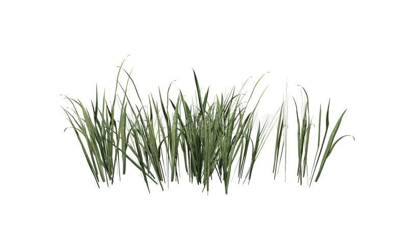 Dik Gras in de zomer vector illustratie