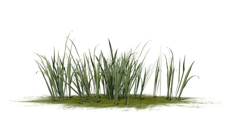 Dik Gras op een groen gebied vector illustratie