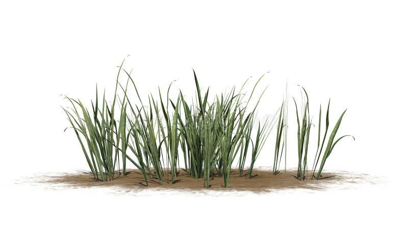 Dik Gras op een zandgebied royalty-vrije illustratie