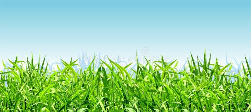 Dik heldergroen gras op een achtergrond van blauwe hemel royalty-vrije illustratie