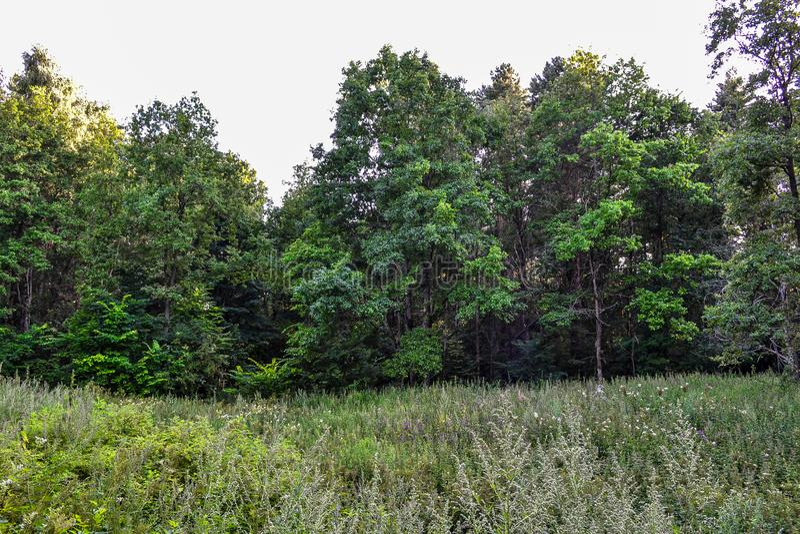 Dik wild vergankelijk bos een ondoordringbaar struikgewas De zomer Rusland stock fotografie