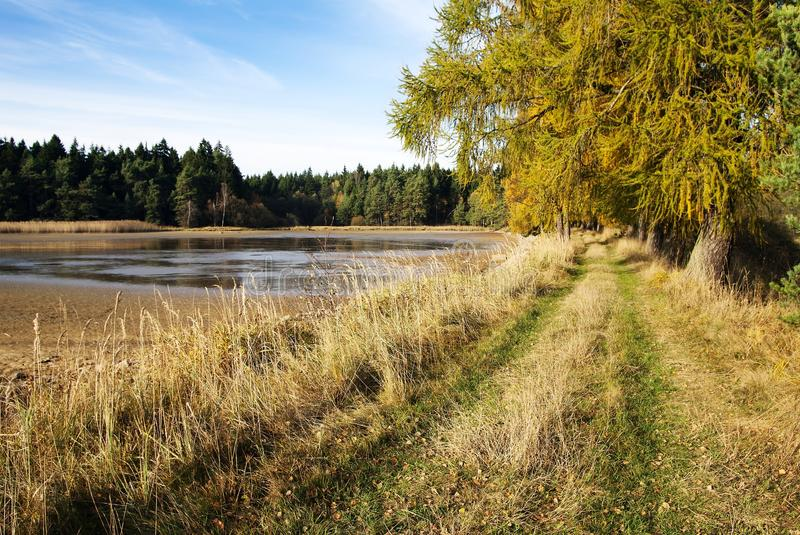 Download Pond with alley of larch stock photo. Image of road, landscape - 28472466