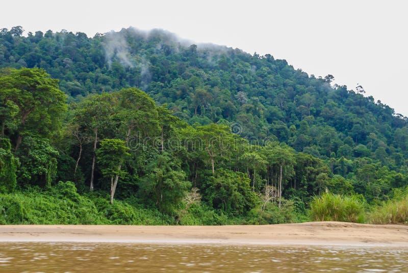Dikke bosdievegetatie tijdens een rondvaart op de Tembeling-Rivier in Pahang, het Nationale Park van Taman Negara, Maleisië wordt stock afbeelding