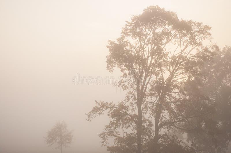 Dikke de herfstmist en kleurrijke bomen in het stadspark royalty-vrije stock afbeelding