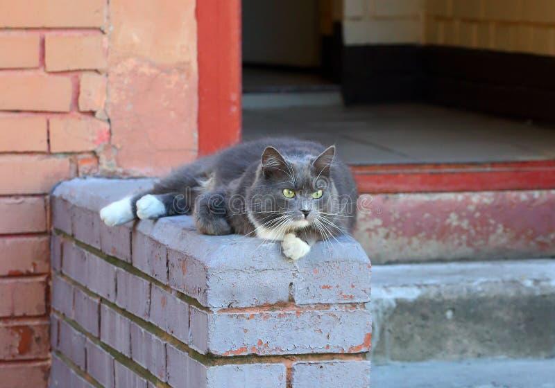 Dikke grijze boze kat die op de portiek liggen royalty-vrije stock fotografie