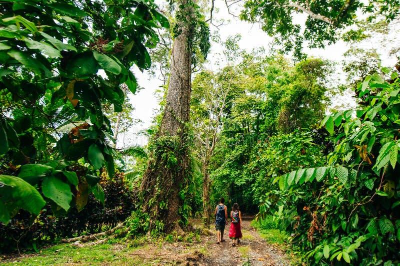 dikke jungle van het Nationaal Park van Corcovado, Costa Rica stock foto's