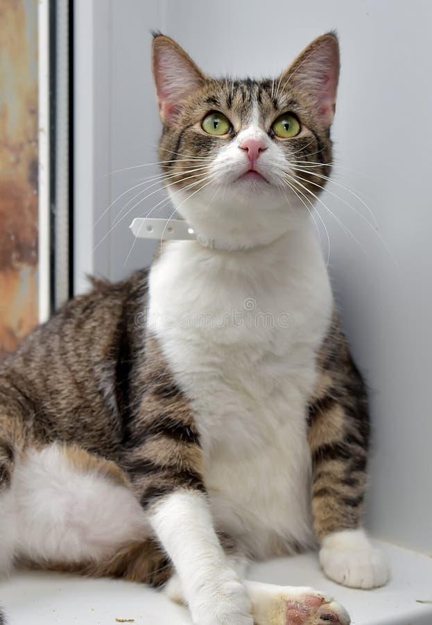 Dikke kat op de vensterbank royalty-vrije stock afbeeldingen