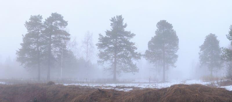 Dikke mist. stock afbeeldingen