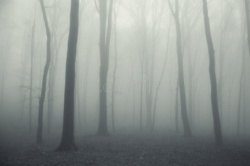 Dikke mist in een griezelig donker bos in de winter royalty-vrije stock foto's