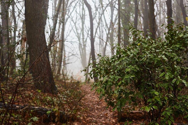 Dikke mist Weg in het natuurlijke bos stock afbeelding