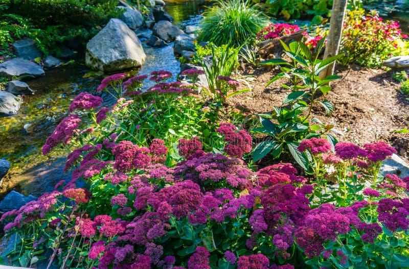 Dikke Roze Bloemen stock afbeelding
