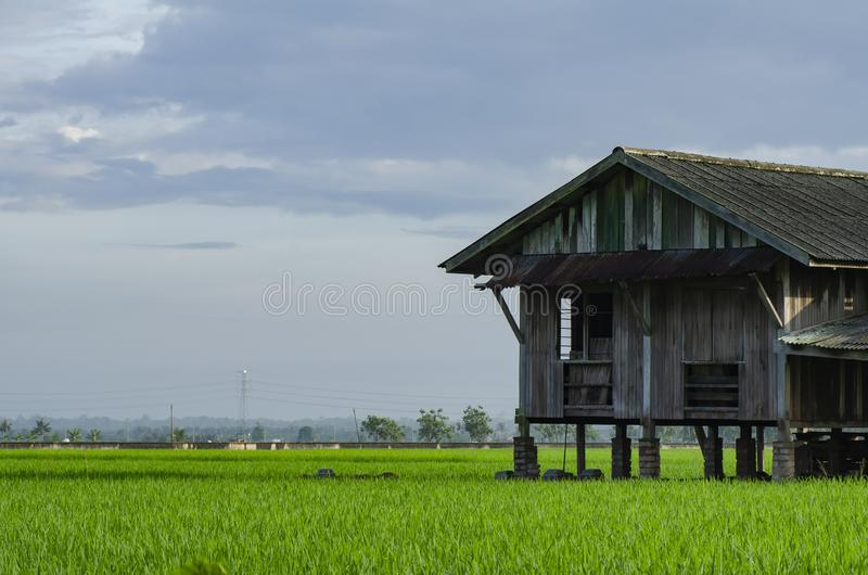 Dilapidated abandon wooden house surrounding paddy field royalty free stock photo