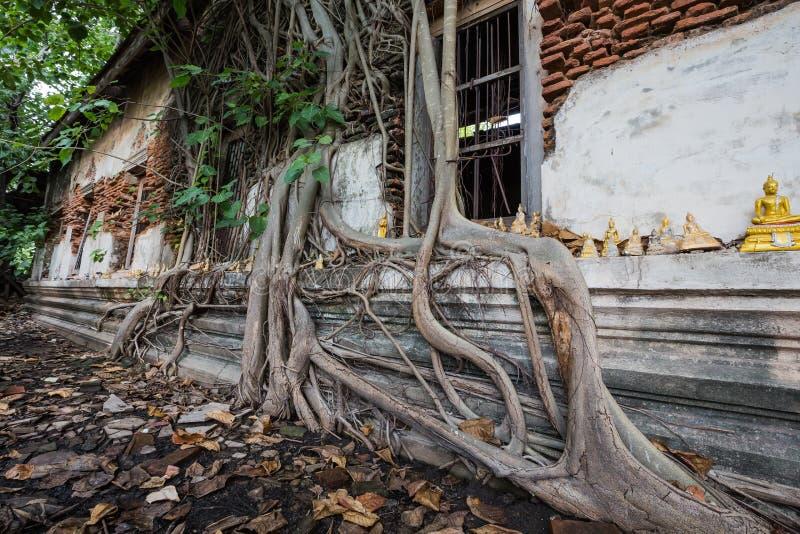 Dilapidated kerk in Wat Rat Bamrung Wat Ngon Kai - Samut Sakhon, Thailand royalty-vrije stock fotografie