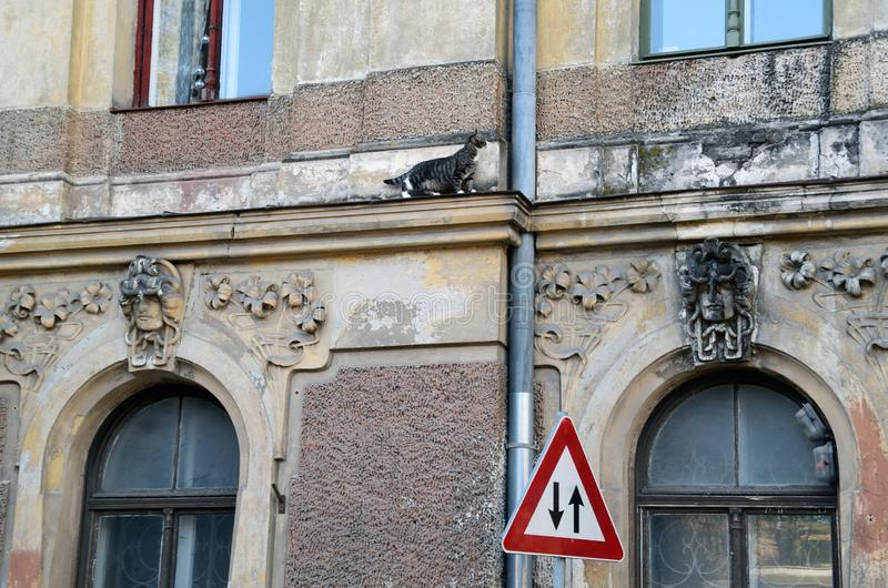 Dilemma for the cat - the choice to go up or down. Brave cat walking on the cornice of the wall - after seeing a traffic sign, he faces a dilemma, whether to go