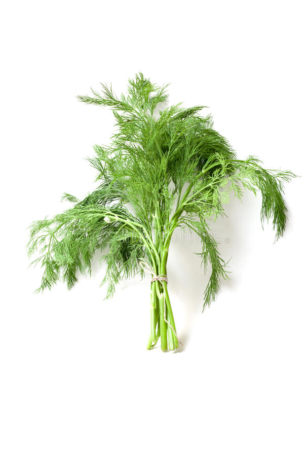 Download Dill stock photo. Image of isolated, vitamin, eating - 19460836