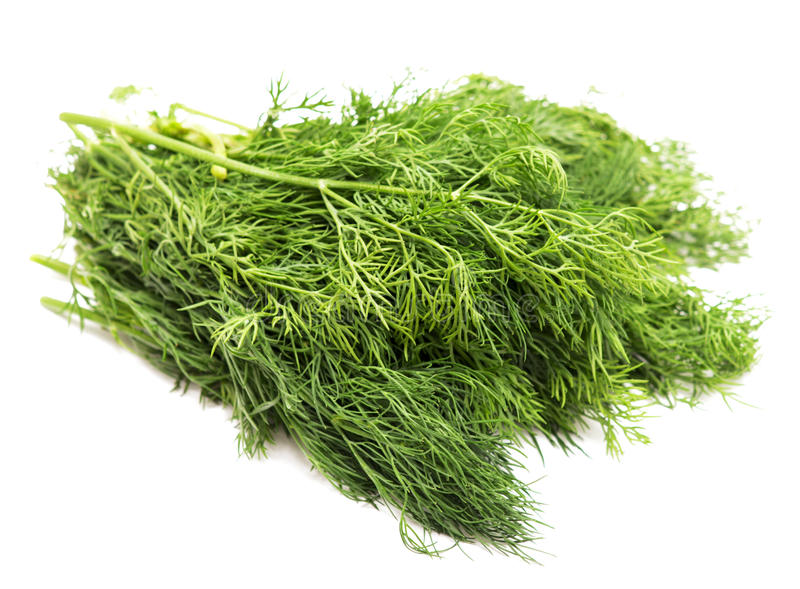 Download Dill stock photo. Image of healthy, spice, food, leaf - 25152062