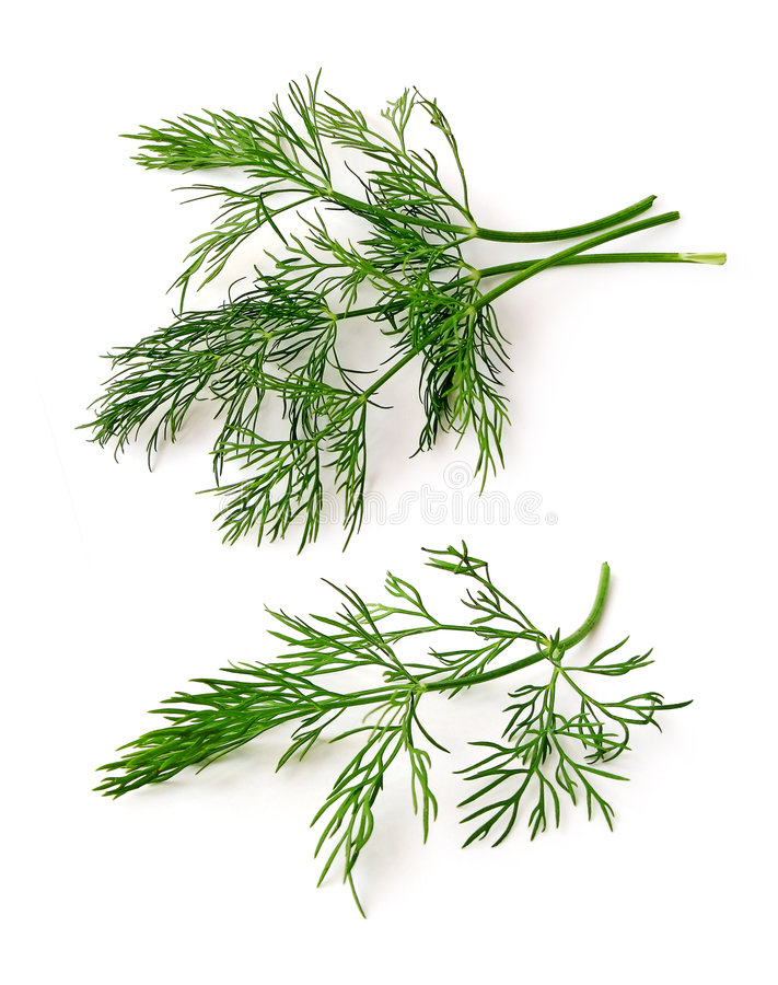 Download Dill stock photo. Image of garnish, gourmet, green, potherb - 6453330