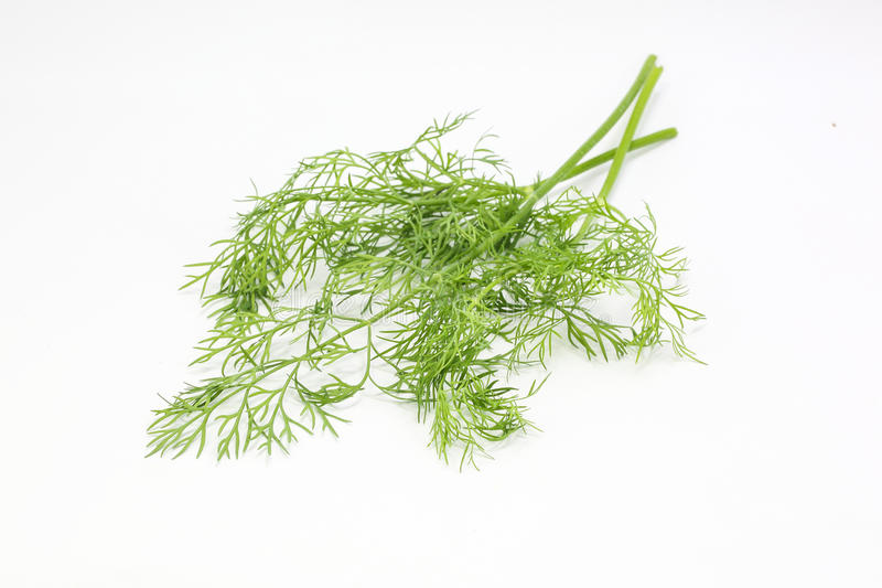 Dill Anethum graveolens herb. Spice on white background royalty free stock photo