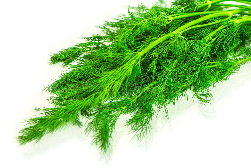 Dill. Bunch of the fresh dill royalty free stock photos