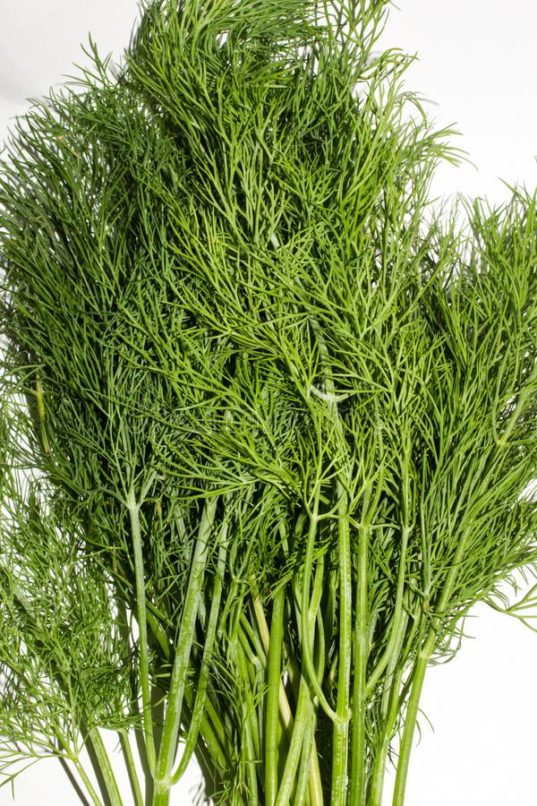 Dill.Fresh green dill. Dill background top view stock photos