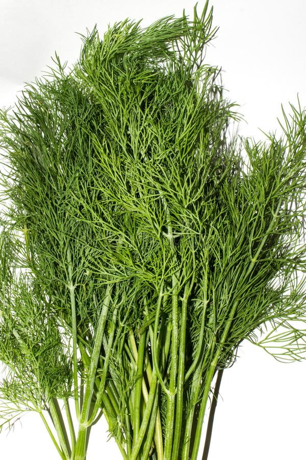 Dill.Fresh green dill. Dill background top view royalty free stock images