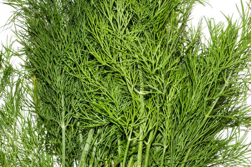 Dill.Fresh green dill. Dill background top view stock photography