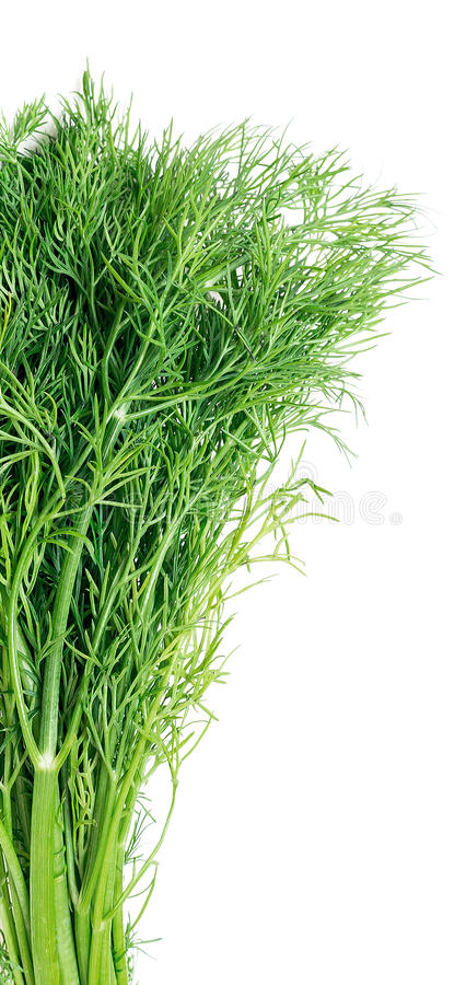 Download Dill stock image. Image of groceries, broom, condiment - 83702365