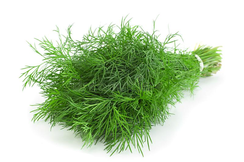 Dill herb bunch on white. Dill herb bunch isolated on white background royalty free stock photos