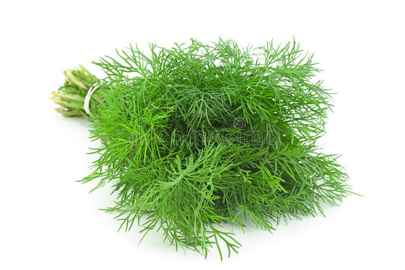 Dill herb bunch on white. Dill herb bunch isolated on white background royalty free stock image