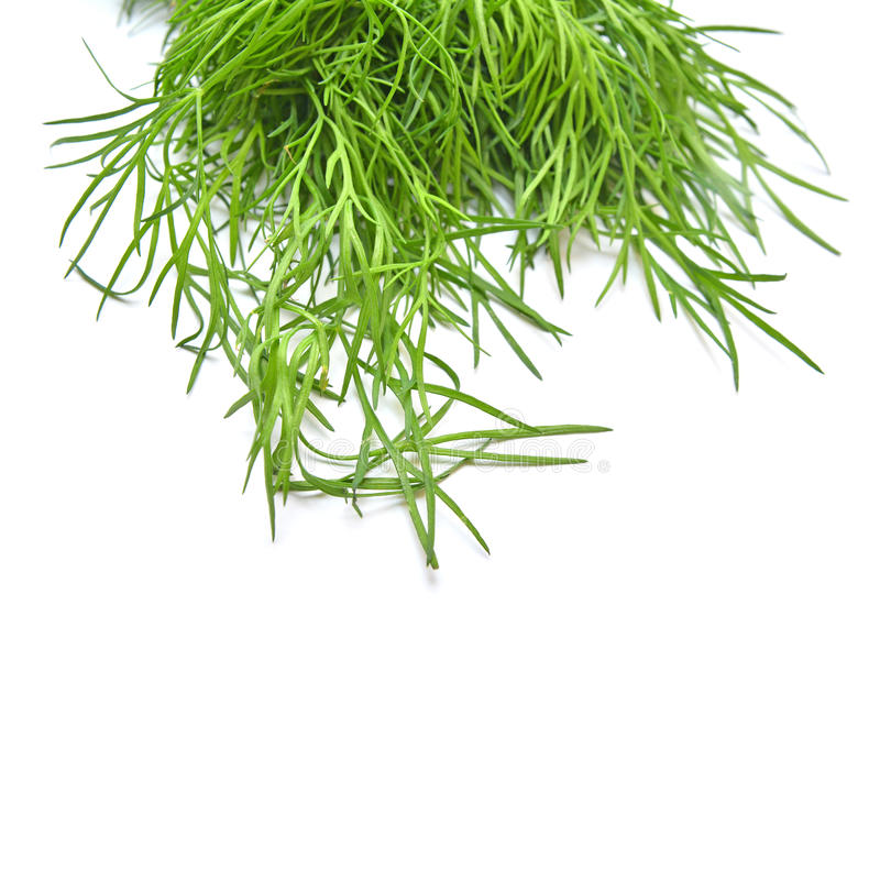 Dill. Leaves with clipping path stock images