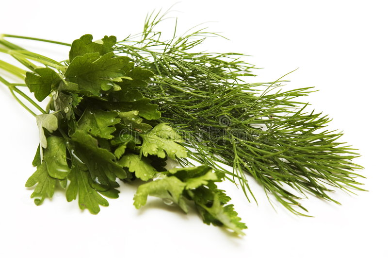 Download Dill And Parsley For A Salad Stock Image - Image of parsley, dill: 5511805