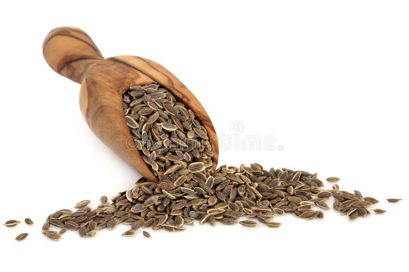 Dill Seed Royalty Free Stock Photo