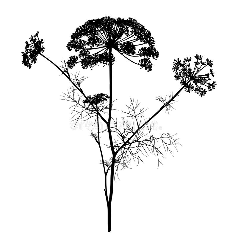 Free Dill Silhouette Isolated On White. Royalty Free Stock Images - 110813389