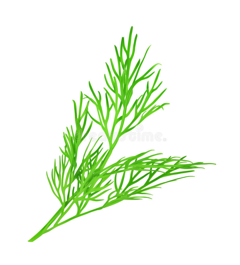 Free Dill Vector Illustration Stock Image - 56999771