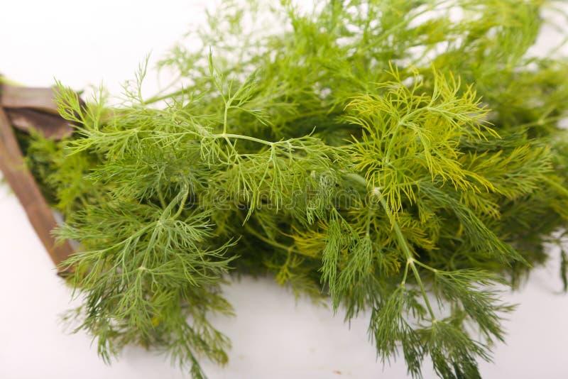 Dill vegetable. Fresh dill vegetable on white stock image