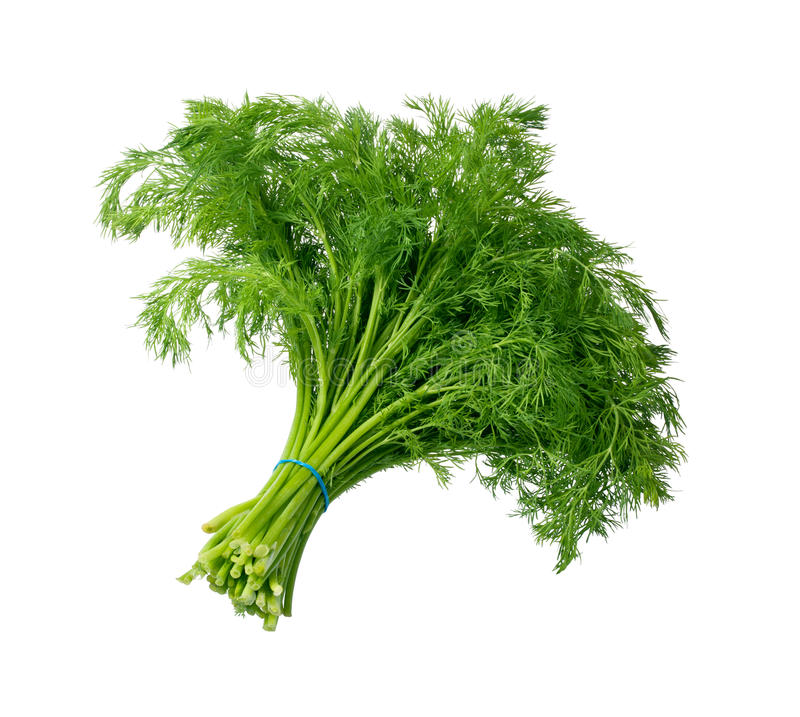 Download Dill  on white stock photo. Image of greenery, fresh - 22983214