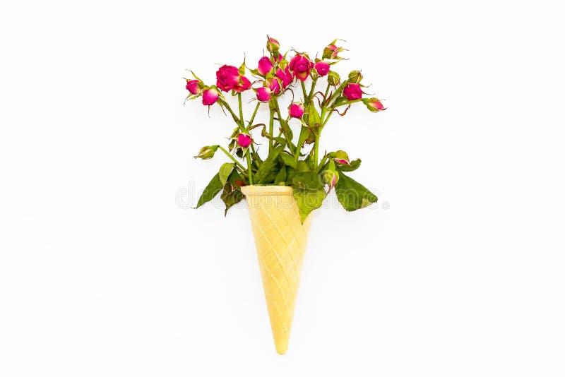 Dillandekotte med en bukett av rosor på en vit bakgrund royaltyfri fotografi