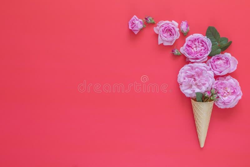 Dillandekotten med rosa rosor blommar buketten på rosa bakgrund royaltyfria foton