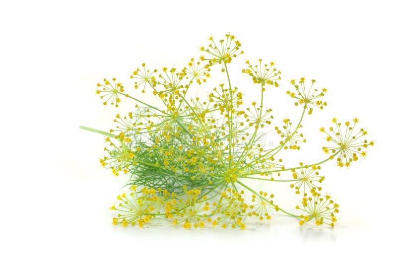 Dille met bloem stock afbeelding