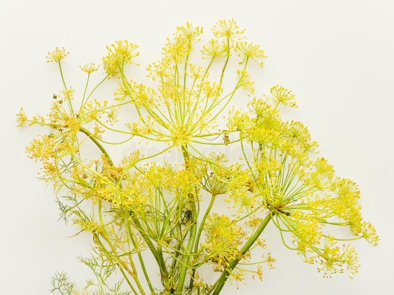 Dillebloemen op wit stock foto's