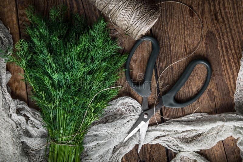 dilled świezi ogrodowi ziele fotografia royalty free