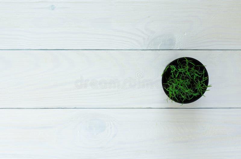Dillezaailingen in een geïsoleerde pot stock foto's