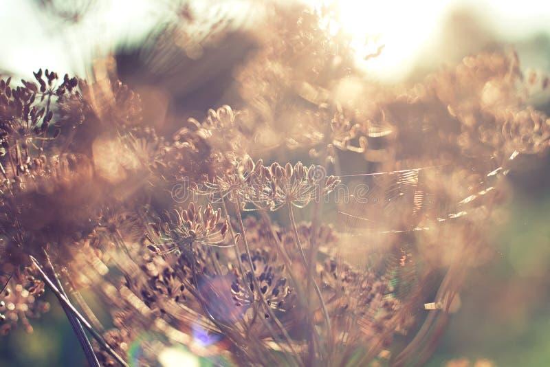 Dillezaden in de zon stock afbeeldingen
