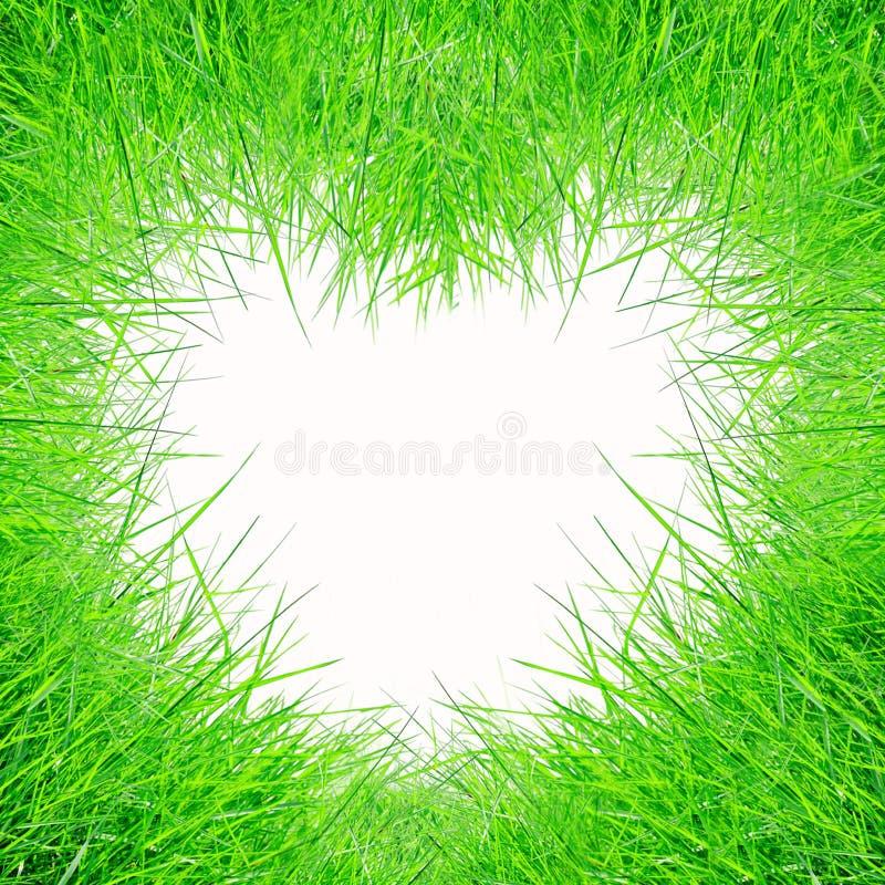 Dimensión de una variable del corazón de la forma de la hierba verde imagenes de archivo