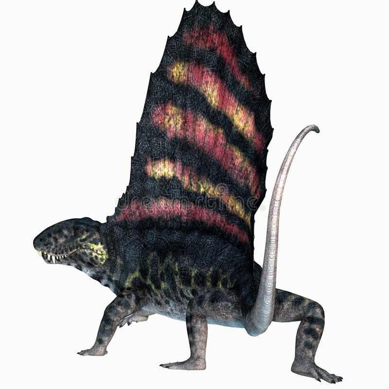 Dimetrodon Permian Reptile Tail. Dimetrodon was a sail-back carnivorous dinosaur that lived in North America and Europe during the Permian Period stock illustration