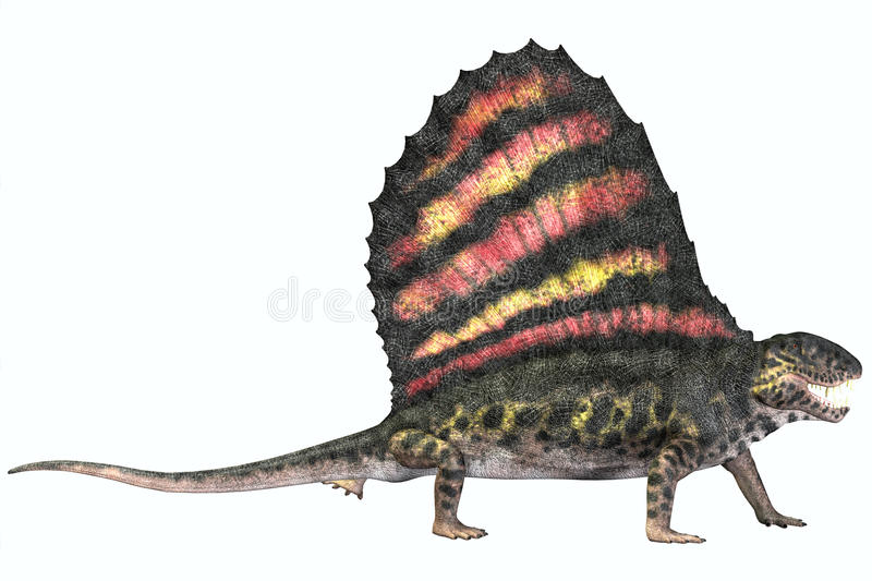 Dimetrodon Permian Reptile. Dimetrodon was a carnivorous mammal-like reptile which lived in the Permian Era of North America and Europe royalty free illustration